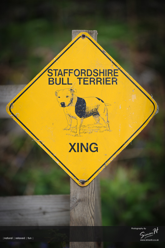 Stockport Pet Photographer - Staffordshire Bull Terrier Crossing